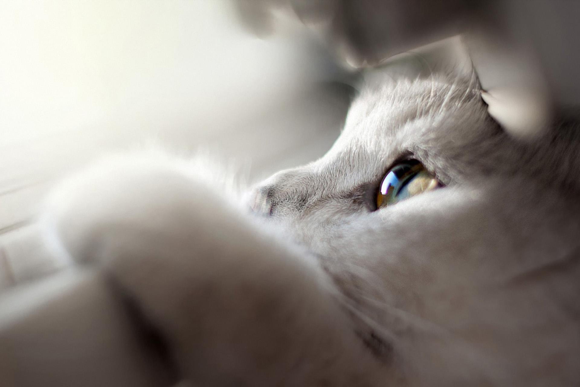 Kira y Lua: Mascotas Chulas